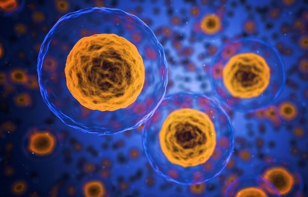 Fat cells have their own immune response; here's how it aggravates obesity