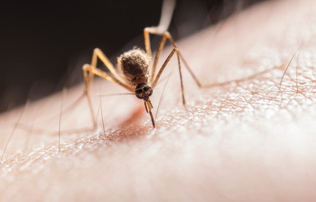 Vaccine made out of mosquito spit out to stop next disease outbreak