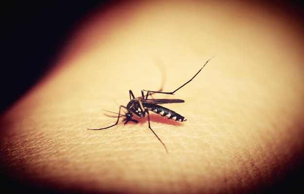 विश्व मच्छर दिवस: मच्छरों से होने वाली कॉमन बीमारियां