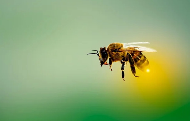 Honey bee venom found to be effective against aggressive breast cancer cells