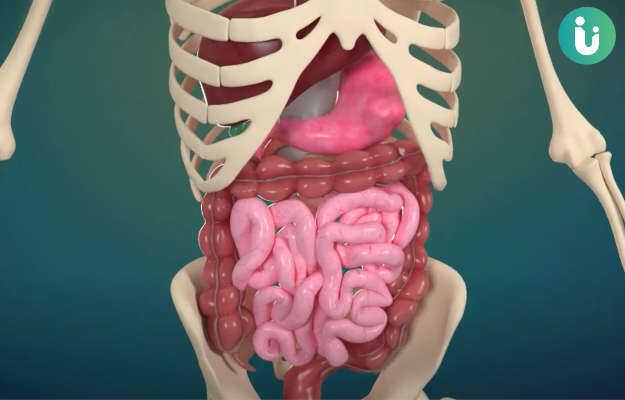 पाचन की 6 स्टेज क्या हैं? - What are the 6 stages of digestion in Hindi?